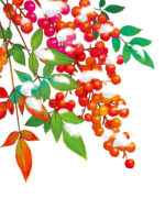 縁起物として庭に南天(なんてん)をなぜ植えるの?のど飴関係ある?